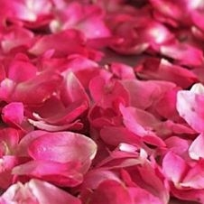wholesale flowers   rose petals hot pink