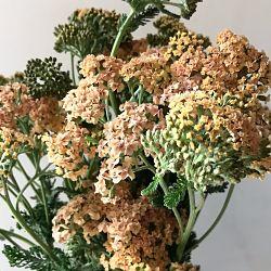 wholesale flowers | yarrow peach