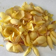 wholesale flowers | rose petals yellow