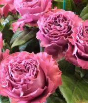 Pink Precious Moments Garden Roses