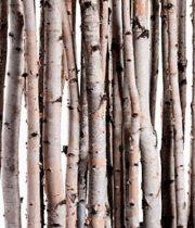 Birch Poles, Small