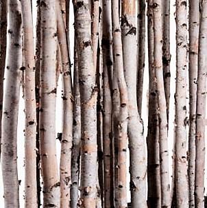 small-birch-poles wholesale