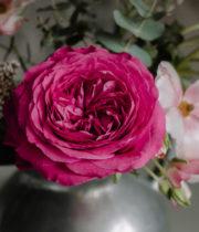 Rose Garden, Capability-SA
