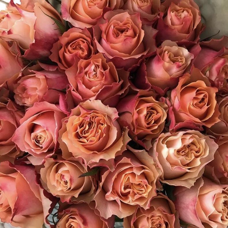 Carpe Diem Rose