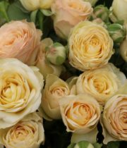 Rose Garden Spray, Citrine Gem-CA