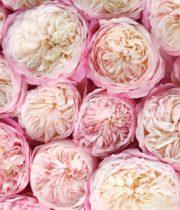Rose Garden, Constance-CA