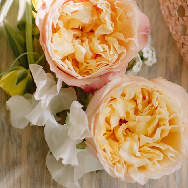 Edith Garden Rose