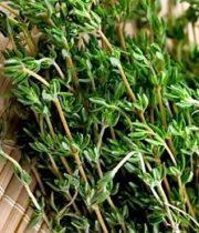 Thyme-fresh, Herb