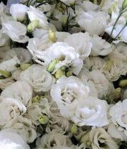 Lisianthus, Ruffle-white