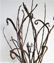 Pussy Willow, Fantail