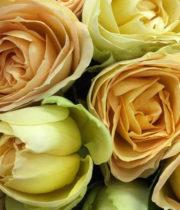 Rose Garden Spray, Quatre Coeurs-CA