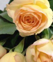 Light Peach Citrine Gem Spray Roses, CA