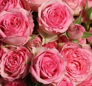 -PINK+SAPPHIRE+GEM-SPRAY-ROSES