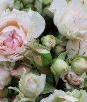 Rose Spray, Bridal Bouquet-CA