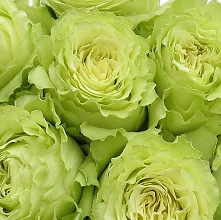wholesale flowers | rose lemonade