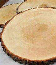 Wood Slices, Large