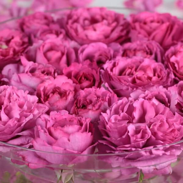Yvet Piaget Rose