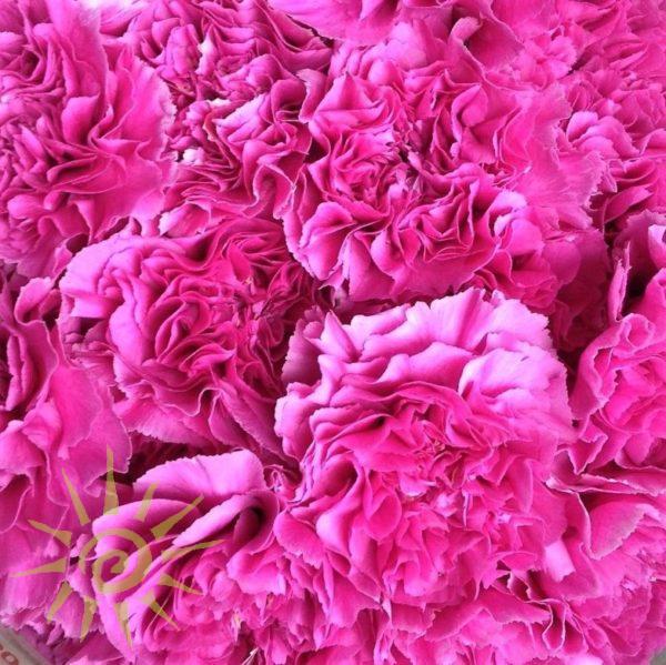 wholesale carnation-farida-pink