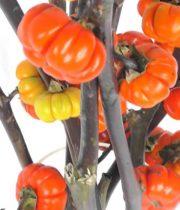 Pumpkin Tree Branches-orange