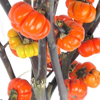 pumpkin-tree-branches