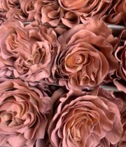 Brown Tinted Macchiato Roses