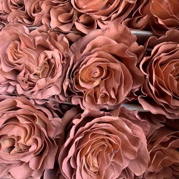 Macchiato Roses