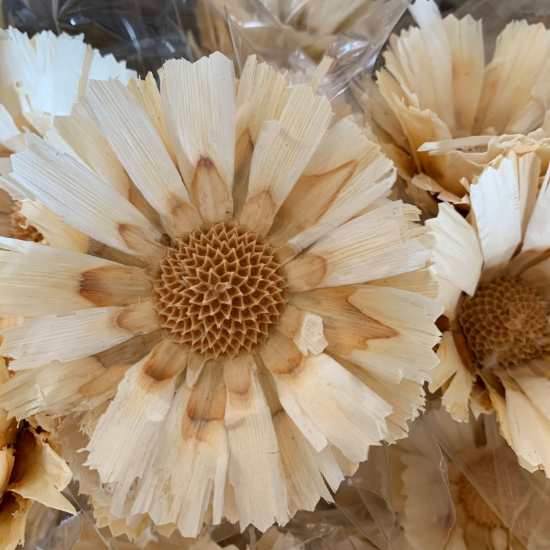 dried bleached protea pods