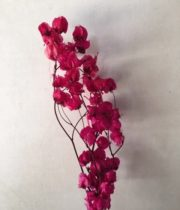 Dried Bougainvillea-hot Pink
