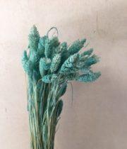 Dried Phalaris-light Blue