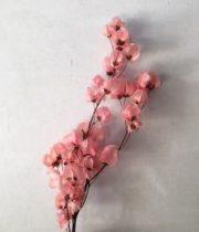 Dried Light Pink Bougainvillea
