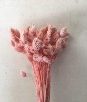Dried Phalaris-light Pink
