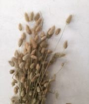 Dried Natural Bunny Tail Grass
