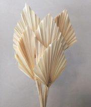 Dried Fan Palm Spears-bleached