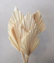Dried Fan Palm Spears-bleached