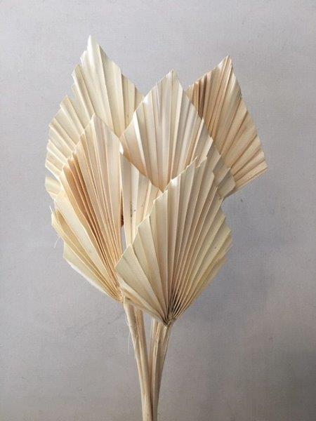 Dried Fan Palm Spears Bleached Florabundance Wholesale Flowers