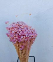 Dried Jazilda-light Pink