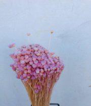 Dried Light Pink Jazilda