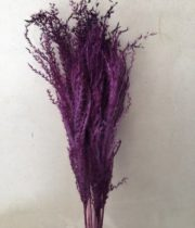 Dried Eulalia Aurea-purple