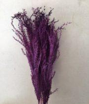 Dried Purple Eulalia Aurea