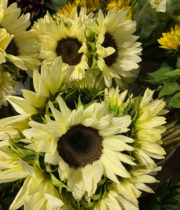 Sunflowers-white