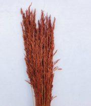 Dried Wild Oats-burnt Oak