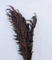 Dried Wild Oats-chocolate