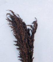 Dried Chocolate Wild Oats