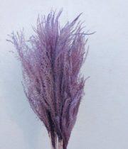 Dried Eulalia Aurea-lavender