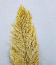 Dried Yellow Italian Fern, Large