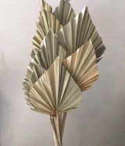 Dried Fan Palm Spears-natural