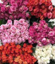 Rose, Assorted Super Premium-Ecuadorian (free Shipping)