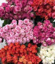 Super Premium Ecuadorian Roses (free Shipping)