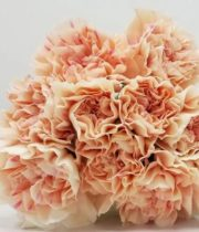 Carnations, Specialty-Apple Tea-peach