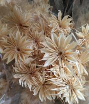 Dried Nigella-bleached